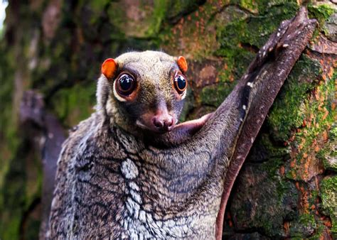 69 Strange Cool and Weird Animals: Mammals Reptiles