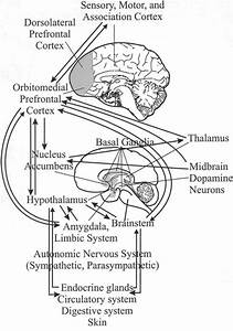 Approximate Location In The Brain Of Some Areas That Are