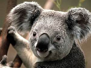 10 things you didn't know about koalas | MNN - Mother ...