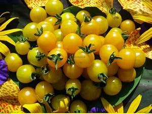 Tomaten Blätter Gelb : gelbe johannisbeere wild tomaten samen scharf lecker ~ Frokenaadalensverden.com Haus und Dekorationen
