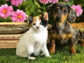 puppy cat cats cats and dogs together pictures