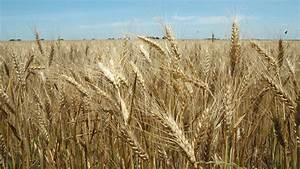 Texas crop, weather for April 19, 2011 | AgriLife Today