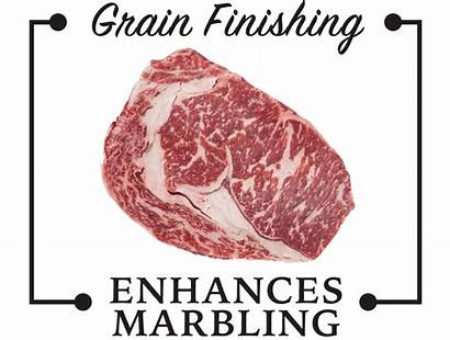 Fed Grass Grain Finished Marbling Beef