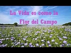 la vida es como la flor co