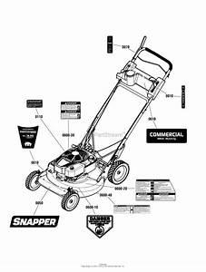 Snapper Crp2187520  7800968