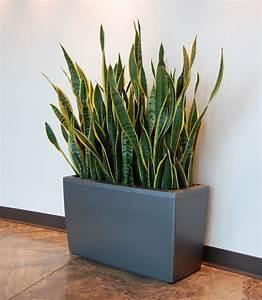 Should, I, Repot, My, Indoor, Tropical, Plant