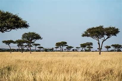 Grassland Savanna Habitat Safari Trees Texas Unsplash