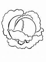 Cabbage Coloring Printable Vegetables Recommended sketch template