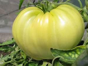 Zimmerpflanzen Alte Sorten : wei es ochsenherz tomate in wei white oxheart ~ Michelbontemps.com Haus und Dekorationen