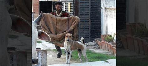 killing isnt  answer kerala  learn  jaipur
