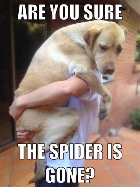 Pet Meme - 1022 best funny or cute pet memes images on pinterest animals dog cute pets and cutest animals