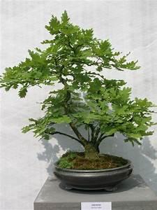 Bonsai Kaufen Berlin : bonsai sch n bonsai eiche beabsichtigt quercus robur als baum lizenzfreies bild wunderbar bonsai ~ Orissabook.com Haus und Dekorationen
