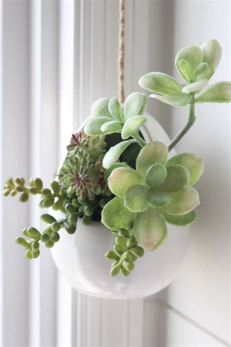 mini succulent arrangements hanging