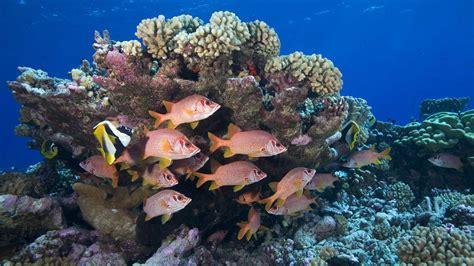 french polynesia polynesians tradition ocean take save work rangiroa squirrelfish sabre atolls reef coral largest under