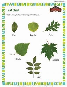Conduct Chart Printable Leaf Chart Free Science Worksheet For 3rd Grade School