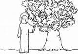 Zacchaeus Coloring Bible Saw Jesus Printable Zaccheus Craft Tree Clipart Cut Testament Template Colouring Biblekids Eu Zacheus Getcolorings Popular Library sketch template