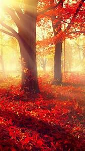 Wallpaper, Park, 5k, 4k, Wallpaper, Autumn, Beautiful