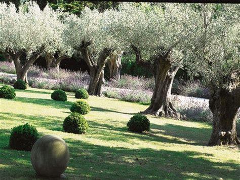 olive garden terre haute les 25 meilleures id 233 es de la cat 233 gorie chs de lavande