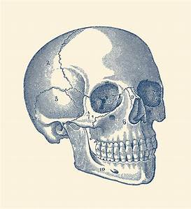 Diagram Of The Human Skull