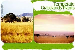 Grassland Biome Animals And Plants Inhabiting This