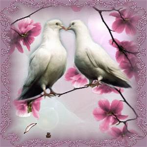Love Birds Animated Pictures for Sharing #124539693 ...