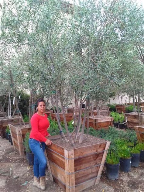 olive garden san bernardino olive garden san bernardino ca photo of olive garden