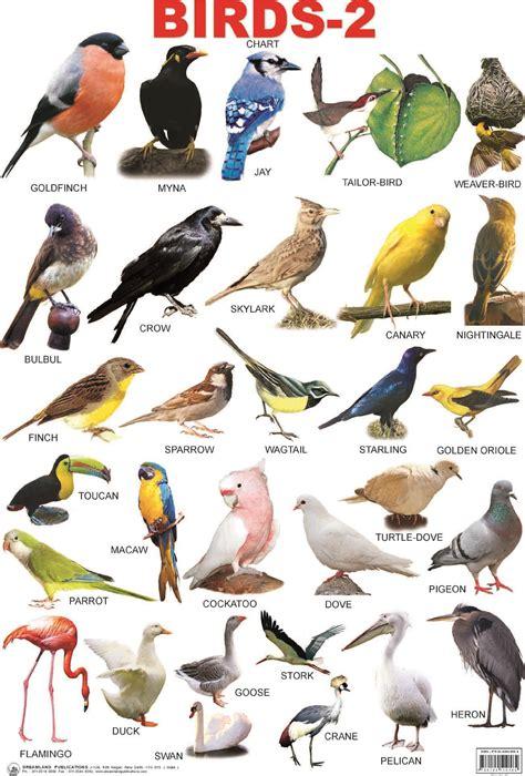 birds with names google search birds and birds