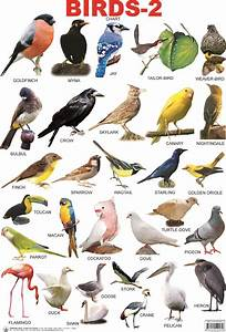 birds with names - Google Search | Birds And Birds ...