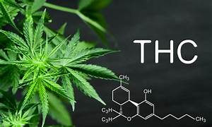 The Ultimate Guide To Cannabinoids In Cannabis