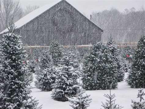 tower family christmas tree farm  beginning