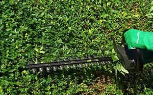 Heckenschnitt Bis Wann : heckenschnitt in kleingartenanlagen wann ist er erlaubt kgv k ssower berg ii e v ~ A.2002-acura-tl-radio.info Haus und Dekorationen