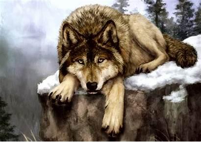 Wolf Lupo Dog Wildlife Saarloos Alaskan Cecoslovacco