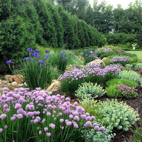 My Favorite Plant Combinations 34 (my Favorite Plant