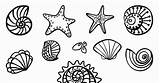 Coloring Seashell sketch template
