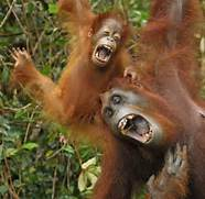 Funny Laughing Animal Pictures   Amazing Creatures  Laughing