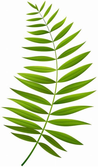 Branch Palm Clipart Transparent Clip Webstockreview