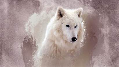 Wolf Wallpapers 1366 768