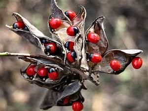 Top 10 Poisonous Plants That Can Kill You If You Eat Them