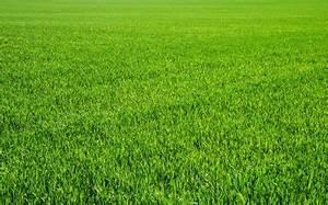 Comment Refaire Sa Pelouse : soci t comment reverdir votre pelouse ~ Carolinahurricanesstore.com Idées de Décoration