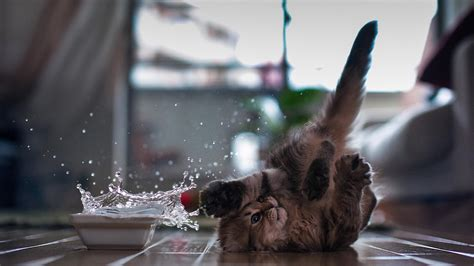 cute kitten wallpapers     day instantly