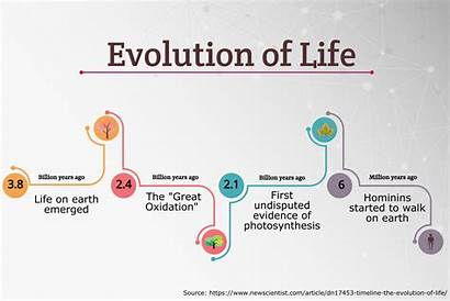 Timeline Evolution Infographic Infographics Easel Templates Simple