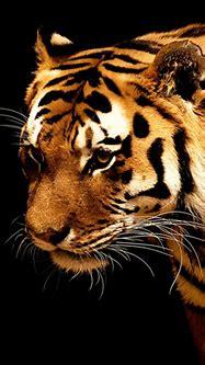 3D Animal Scraps, 3D Animal Greetings, 3D Animal Graphics ...