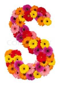 sunflower corsage letter s flower alphabet isolated on white background
