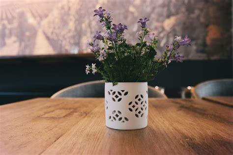 purple flowers pexels  stock