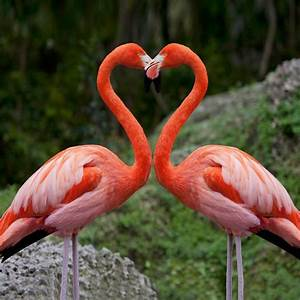 17 Best images about FLAMINGOS gone Wild on Pinterest ...