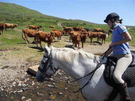 cattle farm herding horse riding dartmoor
