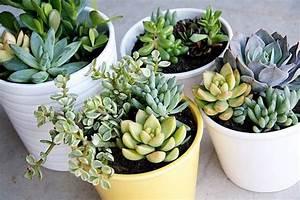 5 piante facili da curare per chi non ha il pollice verde