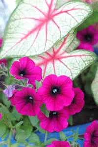 Shade Plants for Planters Outside