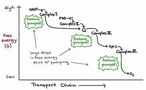 Why Is An Electron Transport Chain Required In Order To