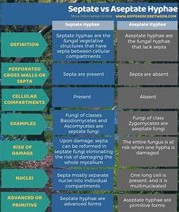 Difference Between Septate And Aseptate Hyphae